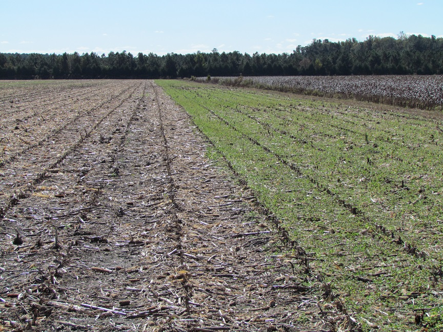 Fall burndown starts your field clean in the spring.