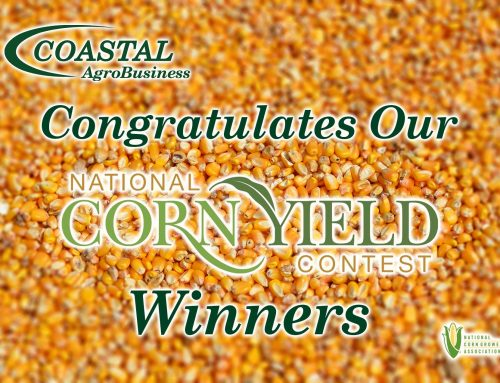 National Corn Yield Contest Winners